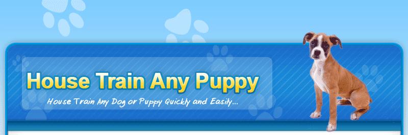 Do Dog Trainers Potty Train